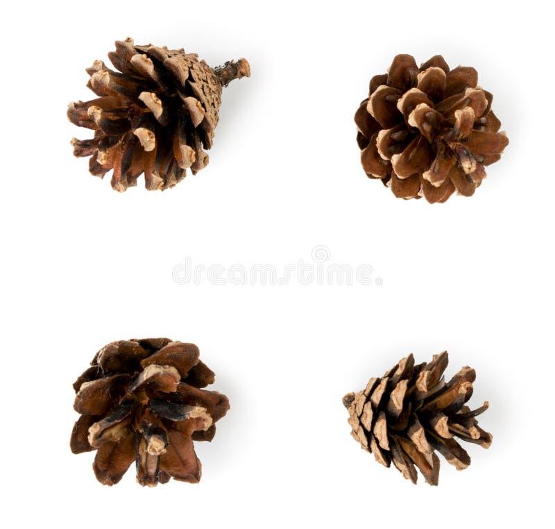 Ensemble de quatre cônes de pin sur un fond blanc, d'isolement image stock