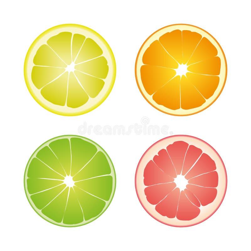 Ensemble de quatre tranches d'isolement colorées d'agrume : chaux de couleur verte, pamplemousse de citron, orange et rose jaune  illustration de vecteur