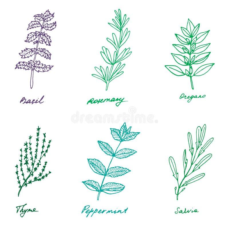 Ensemble de quelques herbes de la Provence : basilic, romarin, origan, thym, dynamisme illustration stock