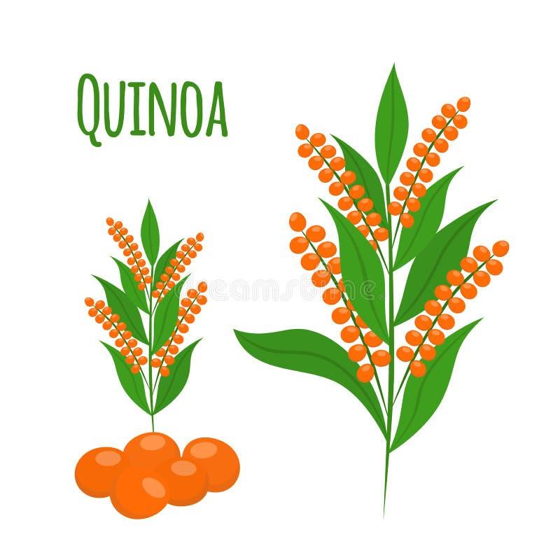 Ensemble de quinoa Graines, nourriture saine de végétarien de quinoa Style plat de bande dessinée illustration de vecteur