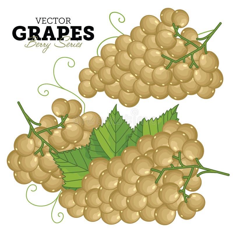 Ensemble de raisin, vecteur illustration de vecteur