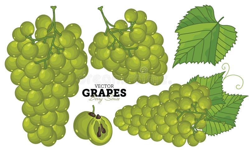 Ensemble de raisin, vecteur illustration stock