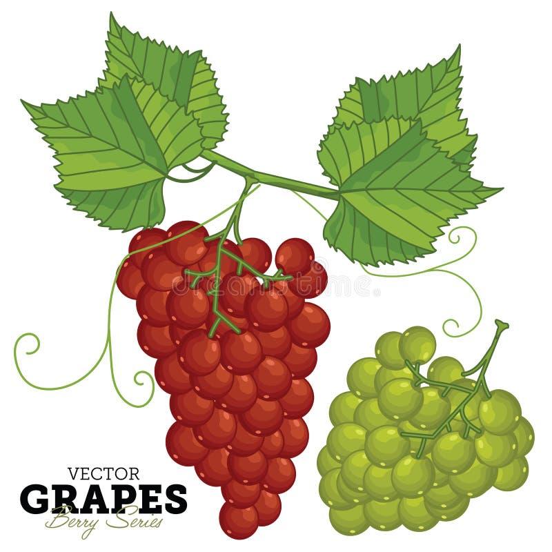 Ensemble de raisin, vecteur illustration libre de droits