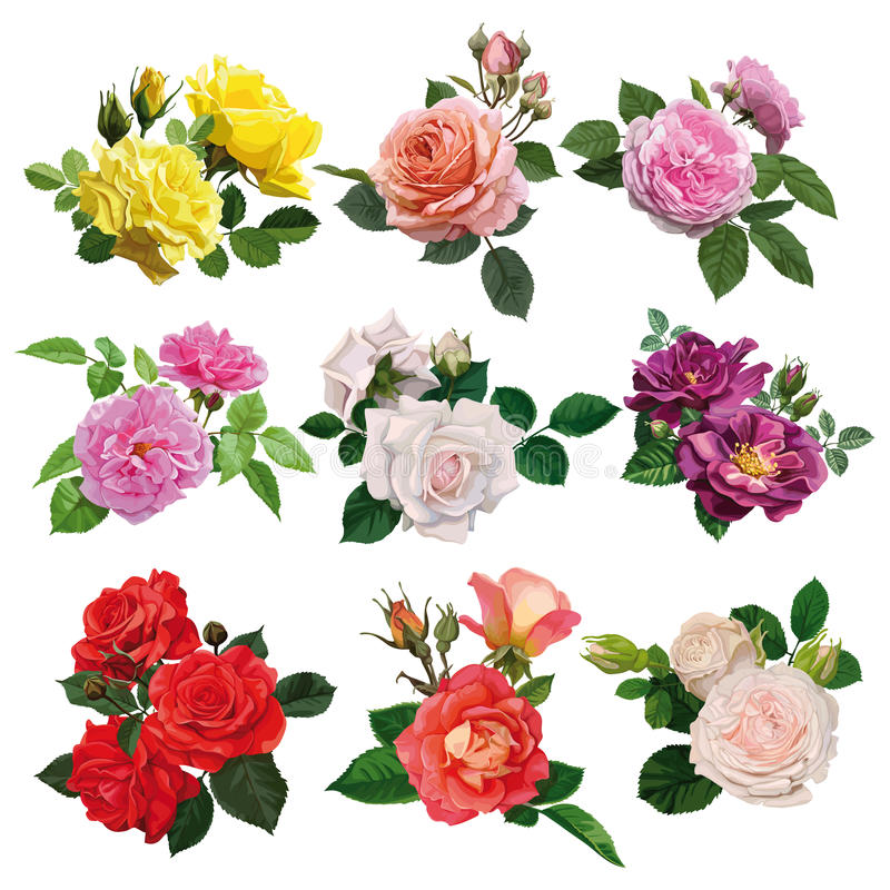 Ensemble de roses multicolores photographie stock libre de droits