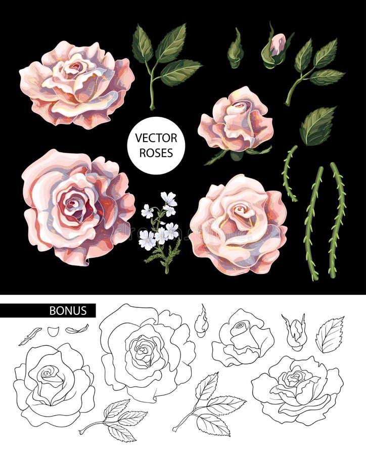 Ensemble de roses de thé, de leurs bourgeons et de feuilles d'isolement Illustration de vecteur illustration stock