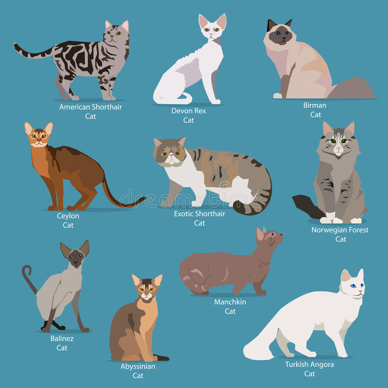 Ensemble de séance plate ou de chats mignons de marche de bande dessinée illustration stock