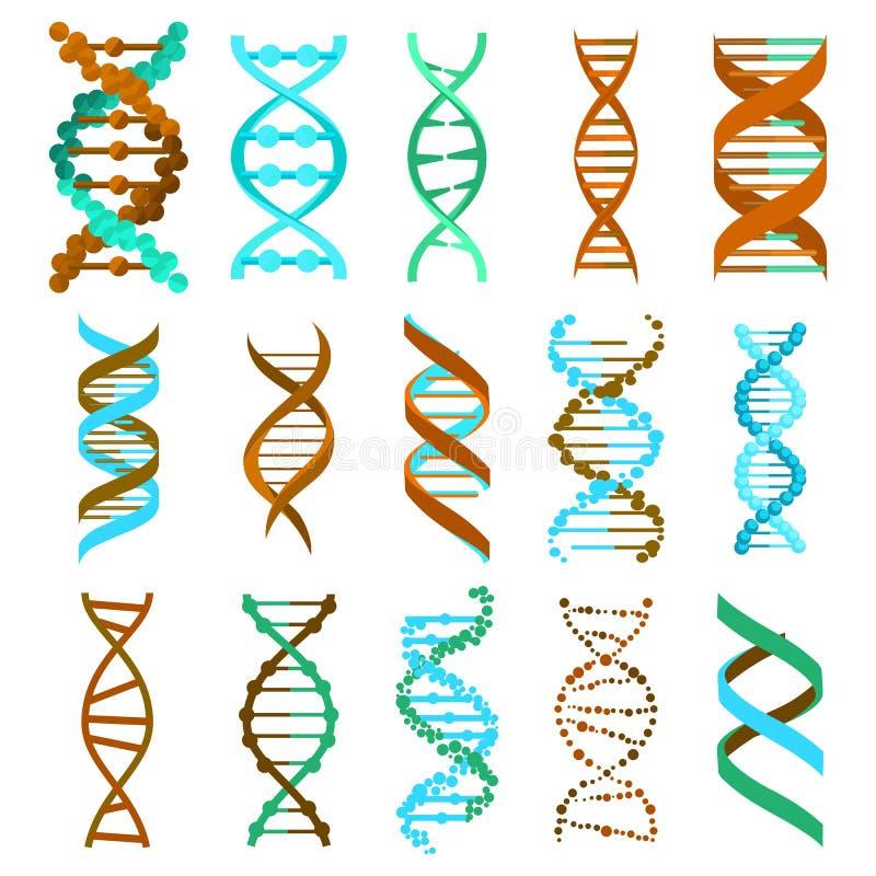 Ensemble de signe de molécule d'ADN, éléments génétiques et brin de collection d'icônes Vecteur illustration de vecteur
