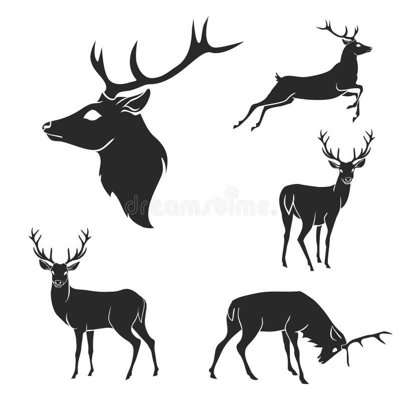 Ensemble de silhouettes de cerfs communs de forêt noire Approprié à illustration stock