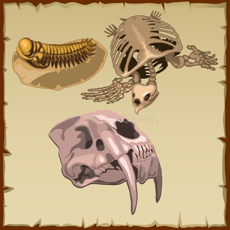 Ensemble de squelettes fossiles, trois animaux différents illustration libre de droits
