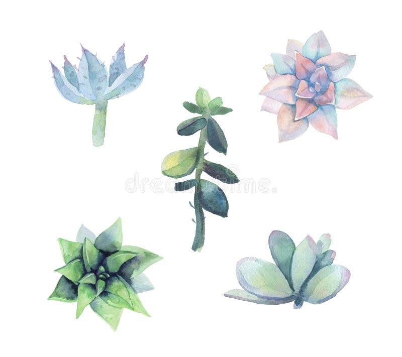 Ensemble de succulent d'aquarelle illustration stock