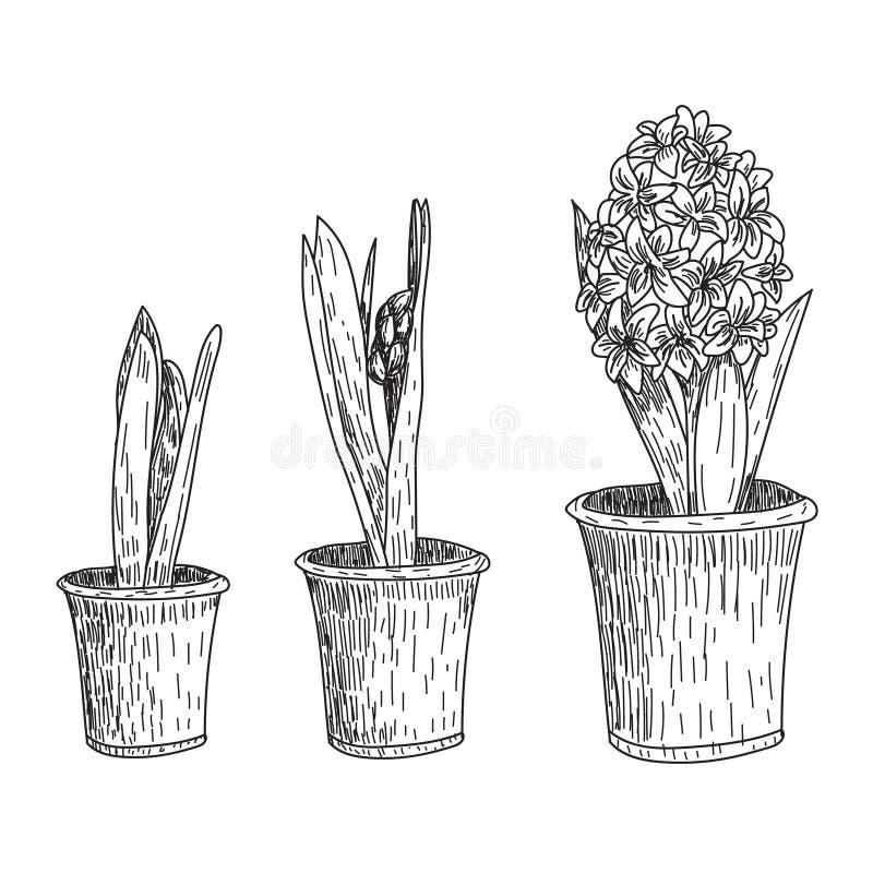 Ensemble de tiré par la main fleurs vecteur de schéma Jacinthe de ressort, jacinthe de raisin, dessins d'encre de crocus pour le  illustration libre de droits