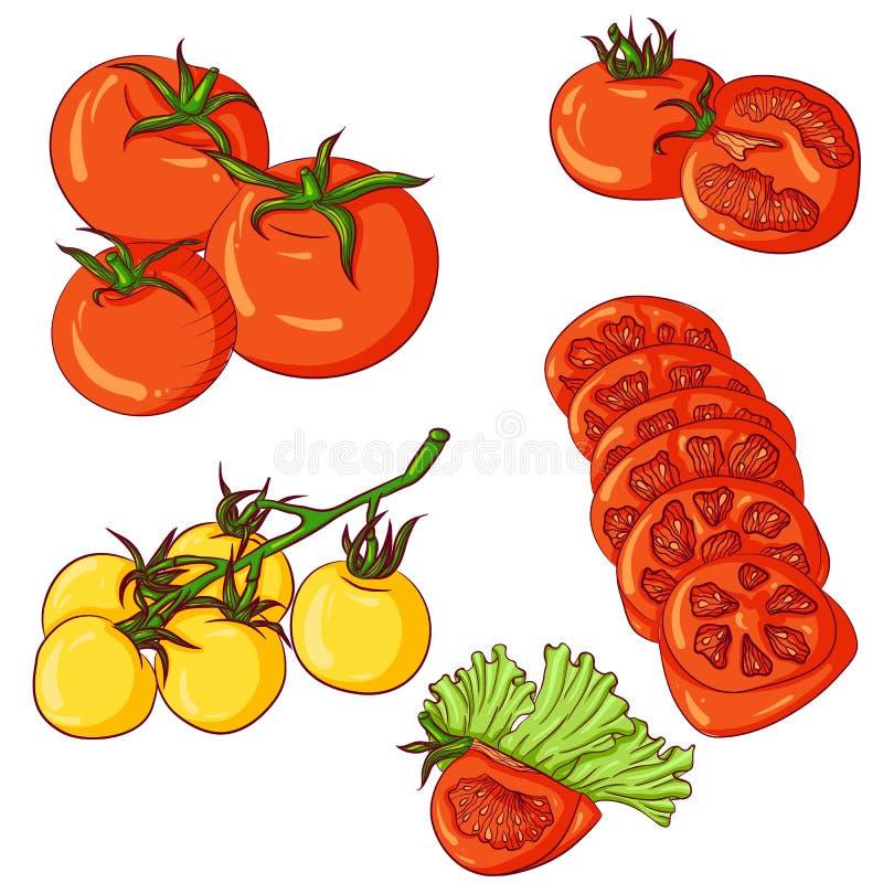 Ensemble de tomates sur le fond blanc illustration libre de droits