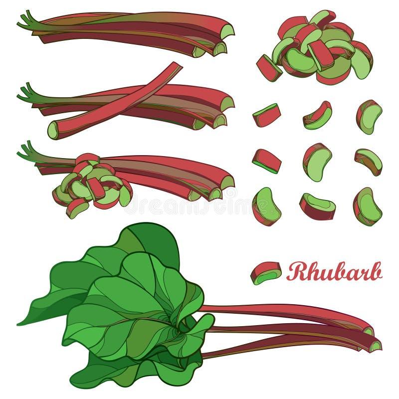 Ensemble de vecteur avec le légume de rhubarbe ou de Rheum d'ensemble en rouge et le vert d'isolement sur le fond blanc Coupe de  illustration stock