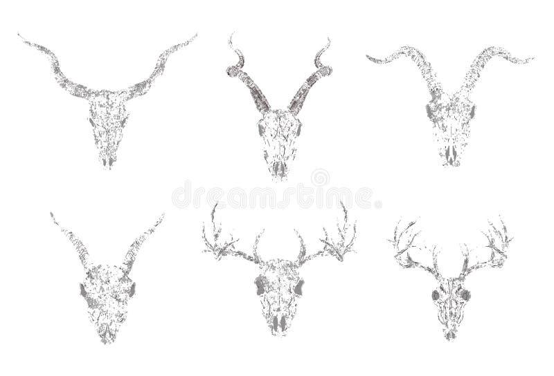 Ensemble de vecteur de crânes de silhouettes des animaux à cornes : antilope, cerfs communs et chèvres sur le fond blanc Style gr illustration de vecteur