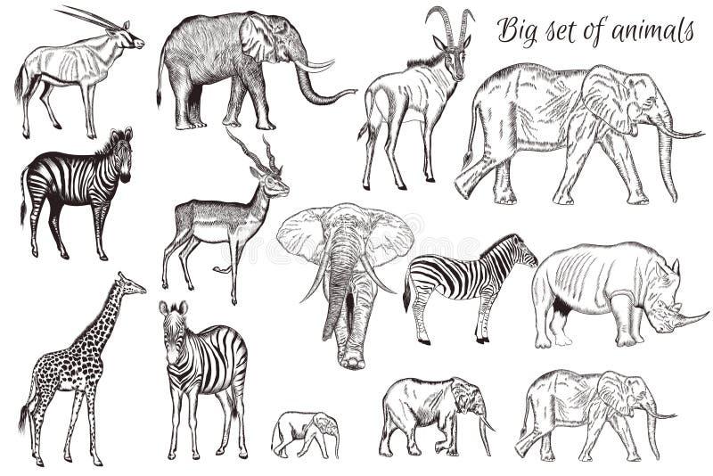 Ensemble de vecteur d'animal africain détaillé tiré par la main illustration stock