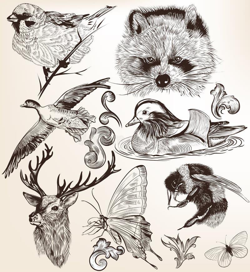 Ensemble de vecteur d'animaux tirés par la main détaillés dans le style de vintage illustration de vecteur
