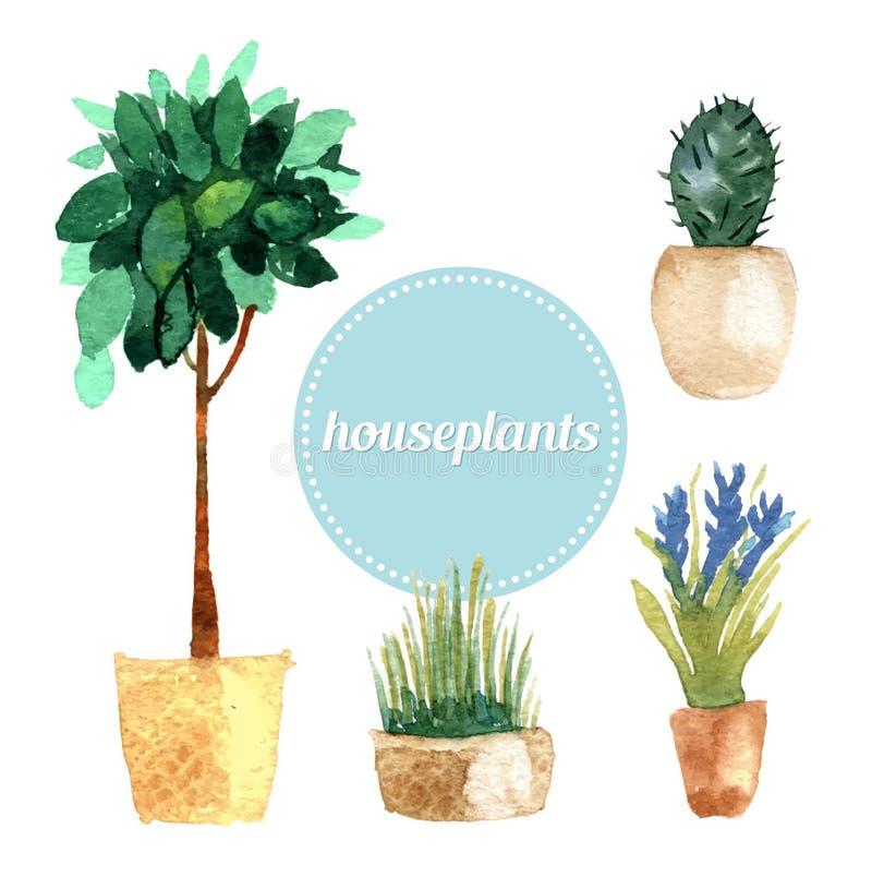 Ensemble de vecteur d'aquarelle de plantes d'intérieur Illustration illustration stock