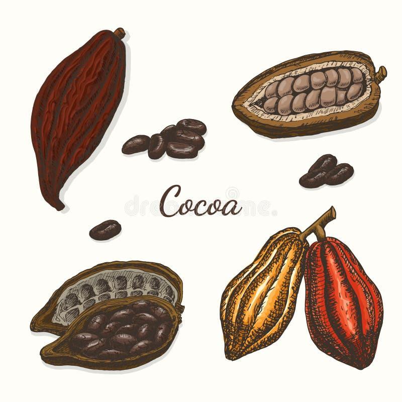 Ensemble de vecteur de cacao coloré illustration de vecteur
