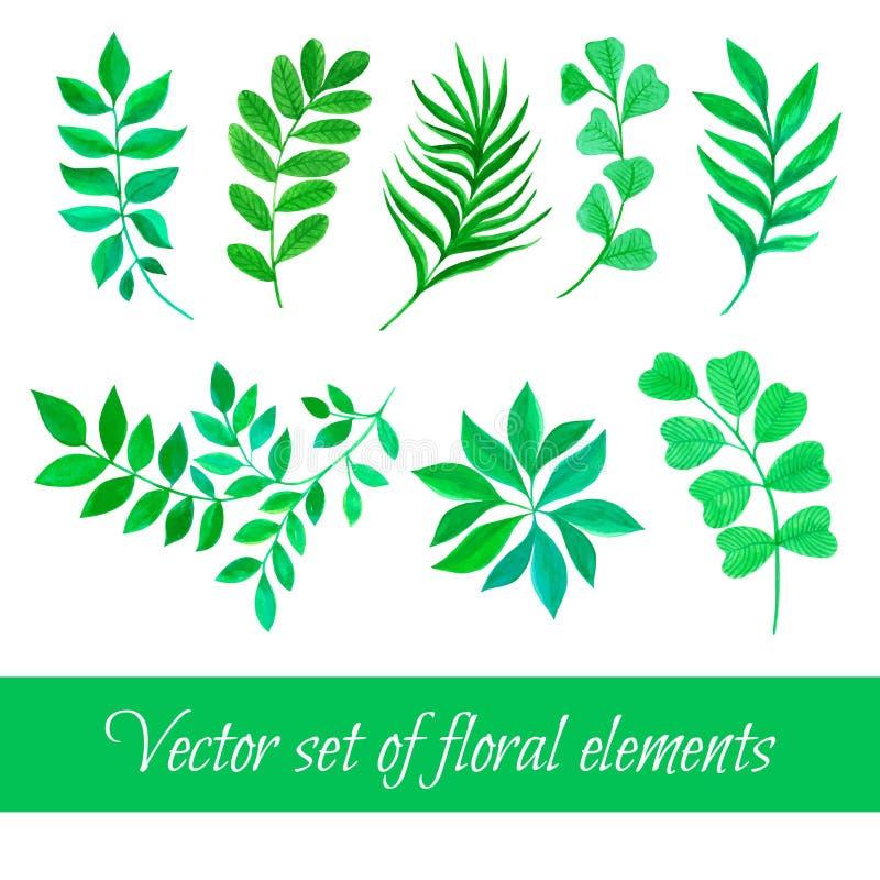 Ensemble de vecteur de collection florale avec des feuilles dessinant l'aquarelle illustration libre de droits