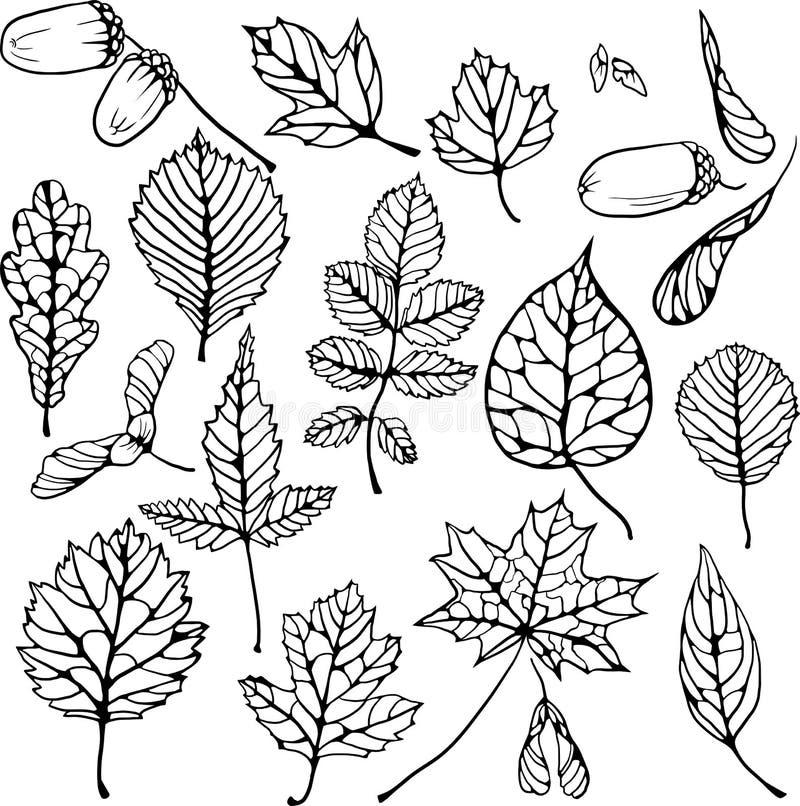 Ensemble de vecteur de feuilles illustration libre de droits
