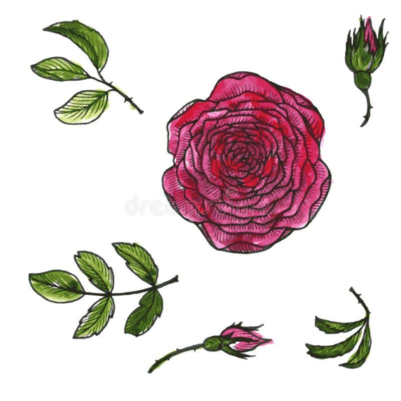Download Ensemble De Vecteur De Fleurs Et De Feuilles Illustration de Vecteur - Illustration du peinture, contexte: 56484300