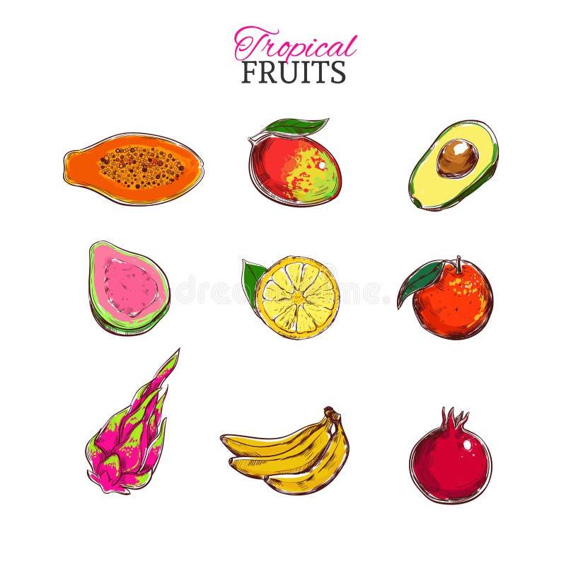 Ensemble de vecteur de fruits tropicaux Papaye, mangue, avocat, goyave, chaux, Dragonfruit, banane, fruit de grenade, orange illustration de vecteur