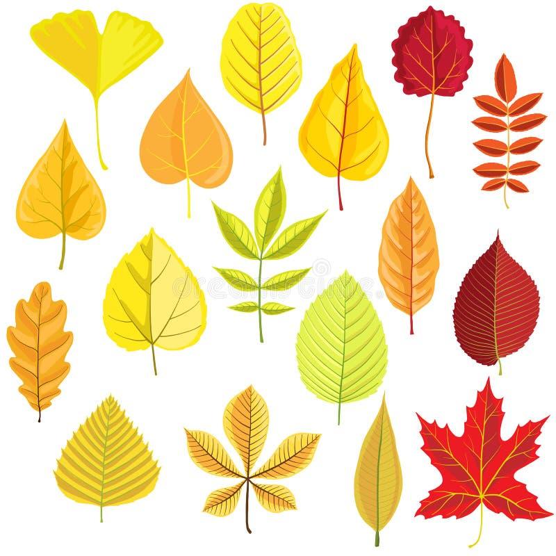 Ensemble de vecteur de feuilles d'arbre illustration libre de droits