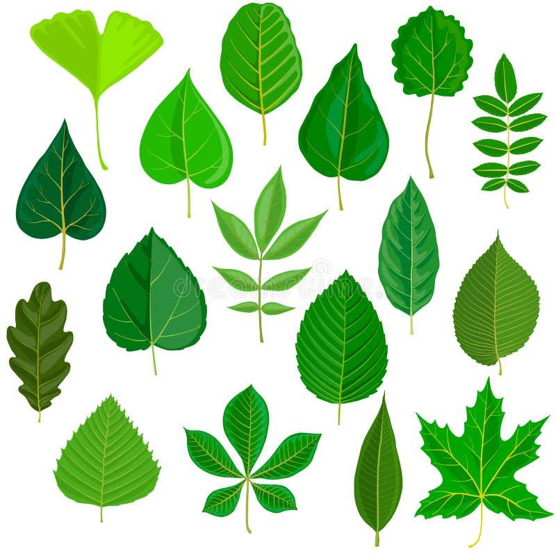 Ensemble de vecteur de feuilles d'arbre illustration de vecteur