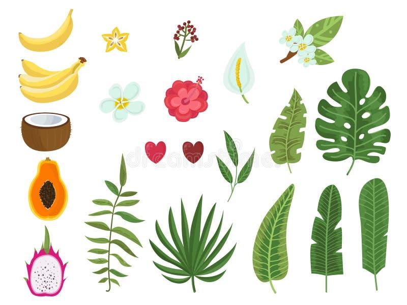 Ensemble de vecteur de feuilles, de fleurs et de fruits tropicaux illustration libre de droits