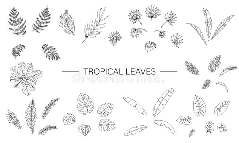 Ensemble de vecteur de feuilles de plante tropicale illustration stock