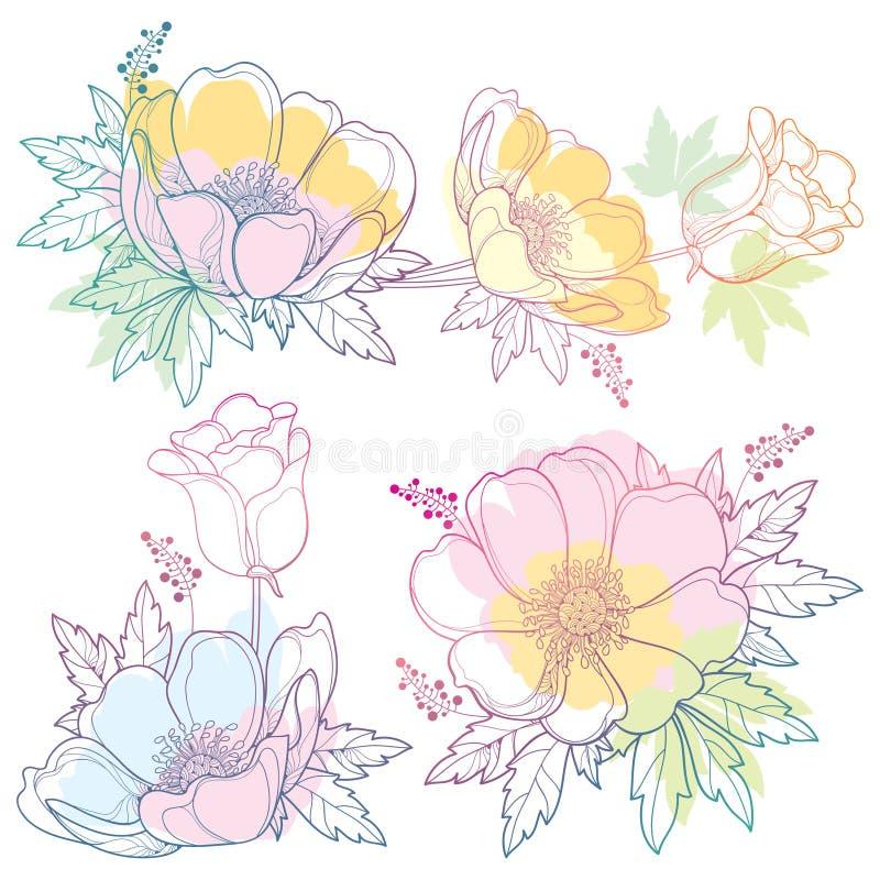 Ensemble de vecteur de fleur ou Windflower d'anémone d'ensemble de dessin de main, bourgeon et feuille dans la couleur de rose, o illustration libre de droits
