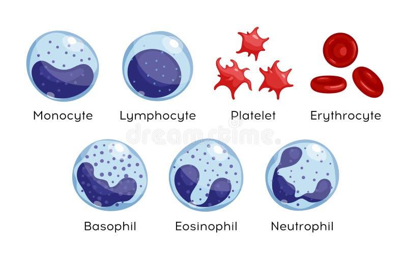 Ensemble de vecteur de monocyte, lymphocyte, éosinophile, neutrophile, basophile, plaquette, érythrocytes Types de globules sangu illustration de vecteur