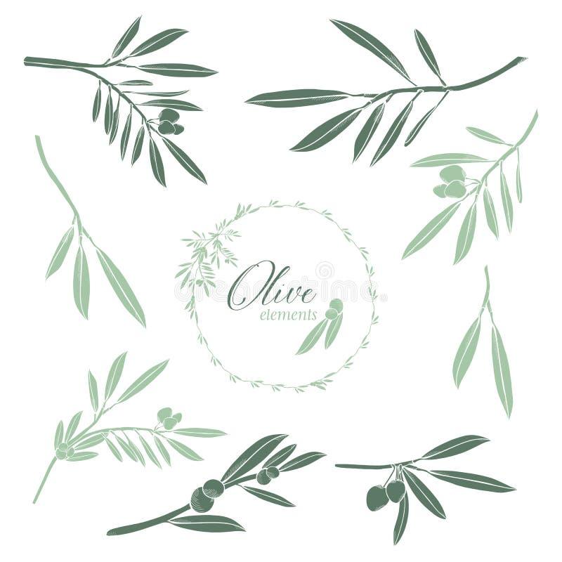 Ensemble de vecteurs tirés par la main d'olives illustration stock