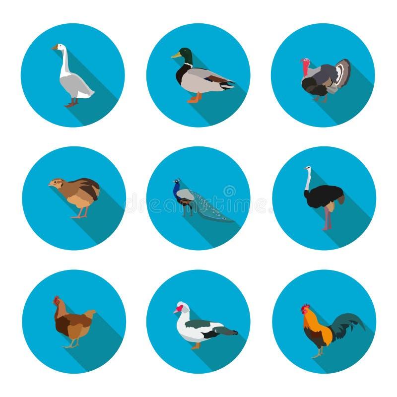 Ensemble de volaille plate d'icônes illustration de vecteur