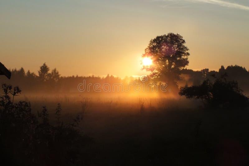 Ensemble du soleil de champs de la Lettonie Lubana images libres de droits