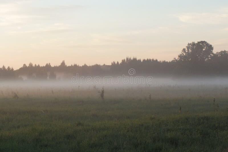 Ensemble du soleil de champs de la Lettonie Lubana photo stock