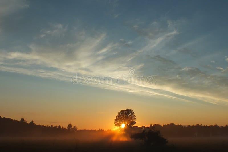 Ensemble du soleil de champs de la Lettonie Lubana photos stock