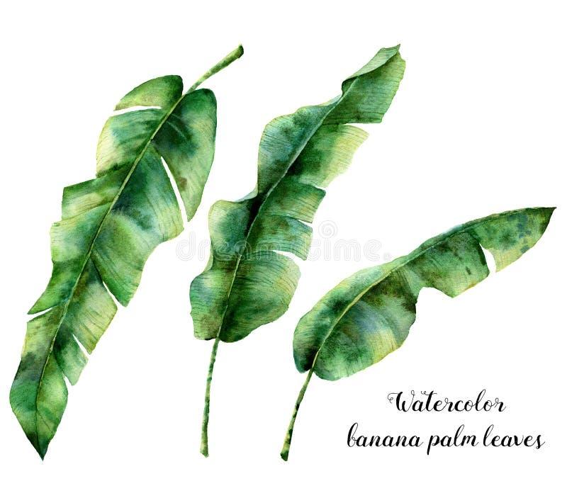 Ensemble floral d'aquarelle avec des palmettes de banane La verdure exotique peinte à la main s'embranchent Usine tropicale d'iso illustration libre de droits