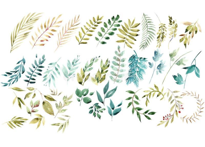 Ensemble floral d'aquarelle Collection florale verte colorée avec des feuilles, aquarelle de dessin Ensemble d'éléments floraux p illustration de vecteur