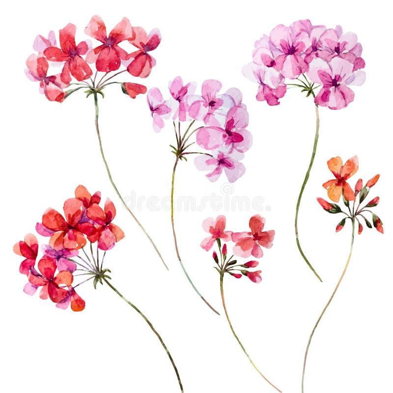 Ensemble floral de géranium d'aquarelle illustration de vecteur