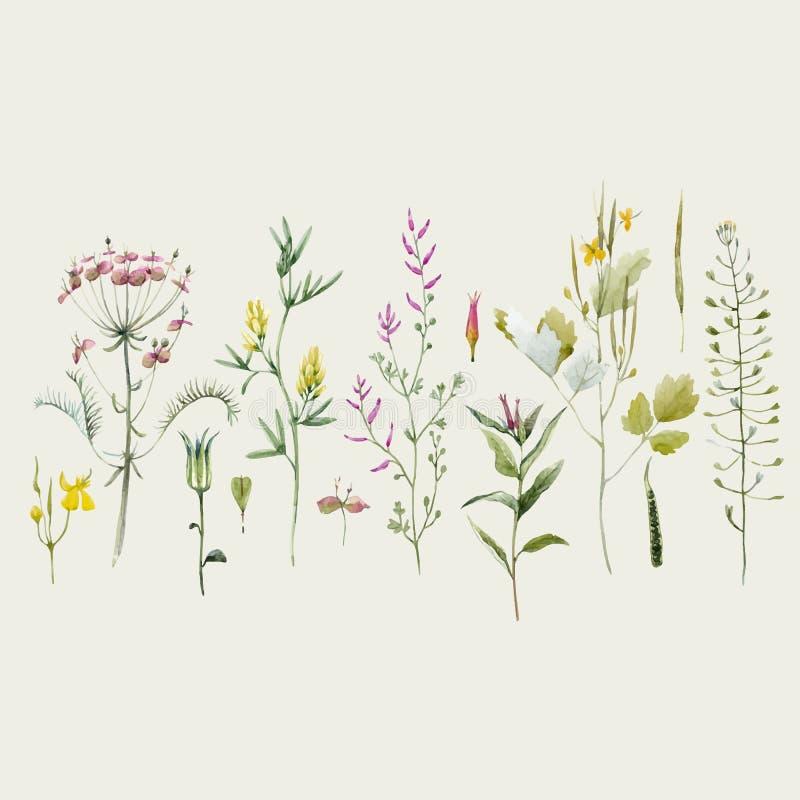 Ensemble floral de vecteur d'aquarelle illustration libre de droits
