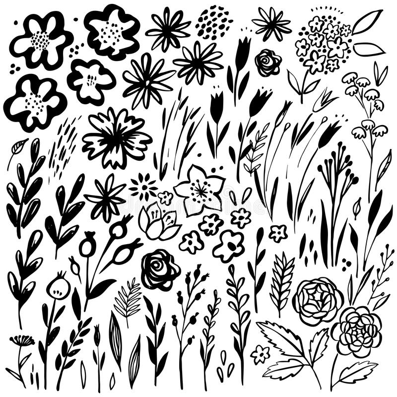 Ensemble floral tiré par la main Éléments floraux de vecteur Collection avec des feuilles et des fleurs illustration stock