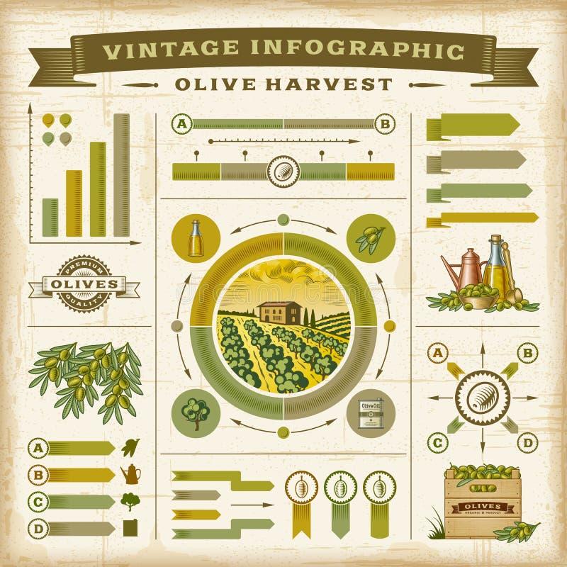 Ensemble infographic de récolte olive de vintage illustration libre de droits