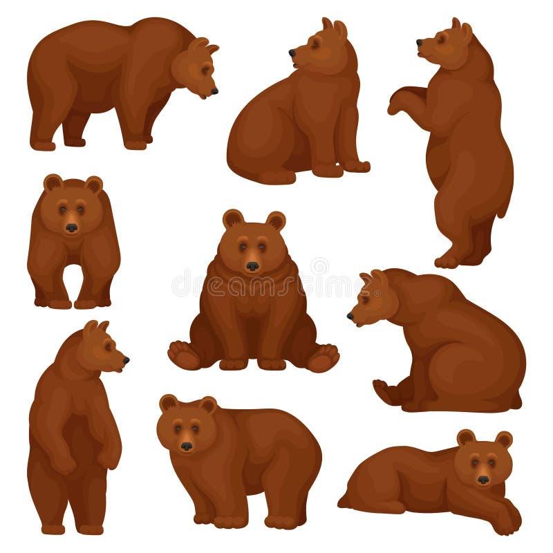 Ensemble plat de vecteur de grand ours dans différentes poses Créature sauvage de forêt avec la fourrure brune Personnage de dess illustration de vecteur