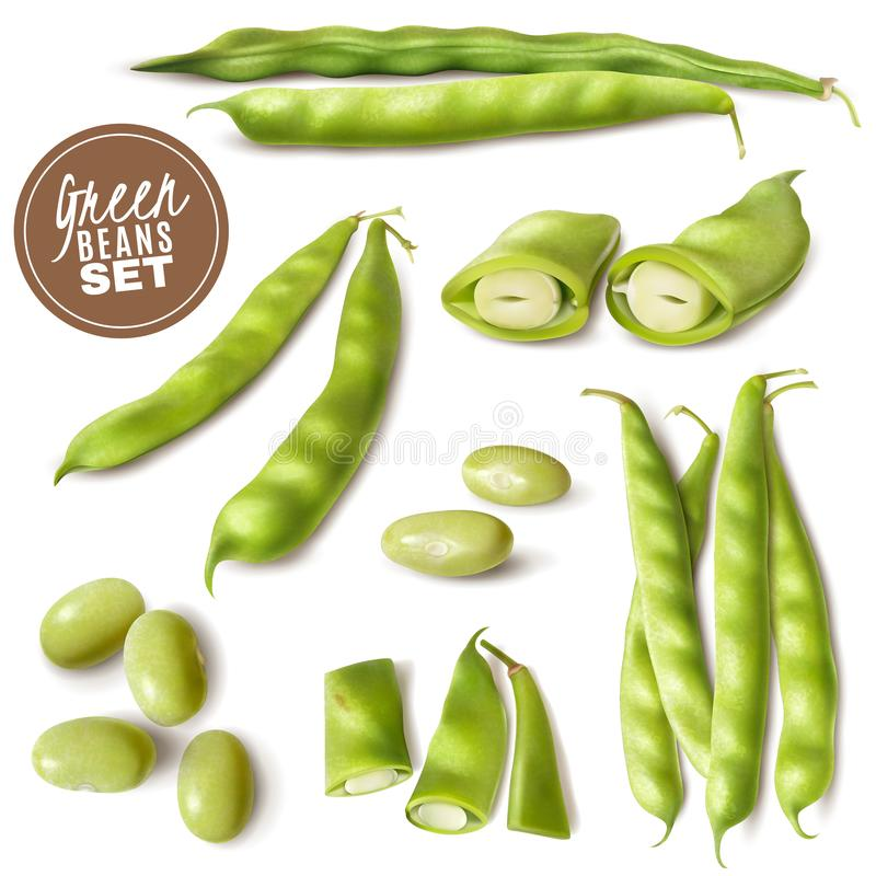 Ensemble réaliste de haricots verts illustration stock