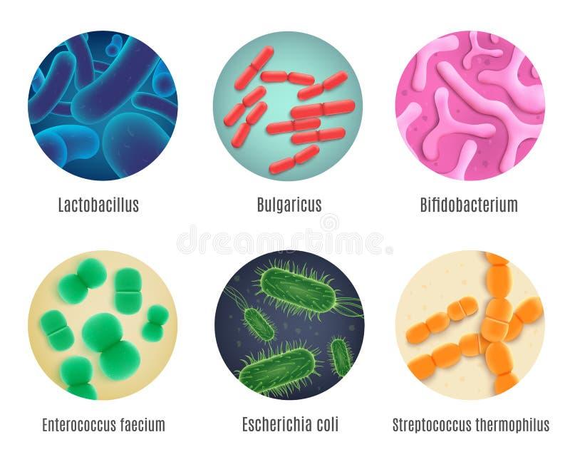 Ensemble réaliste de vecteur de bactéries humaines symbiotiques illustration de vecteur