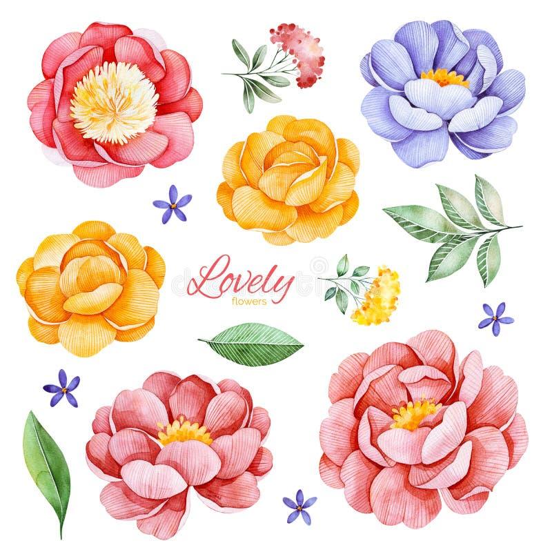 Ensemble romantique peint à la main avec des pivoines, des fleurs, des roses et des feuilles d'aquarelle illustration libre de droits
