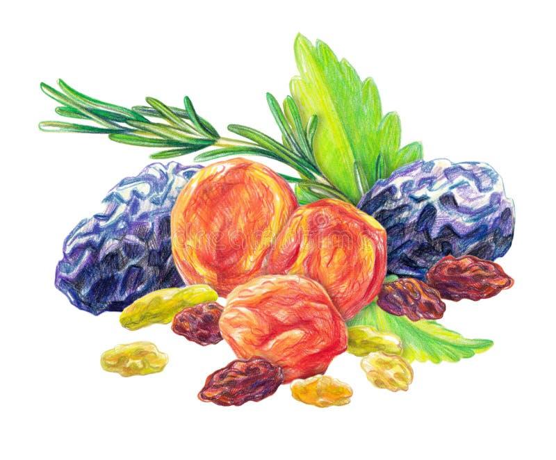 Ensemble sec de fruit illustration libre de droits