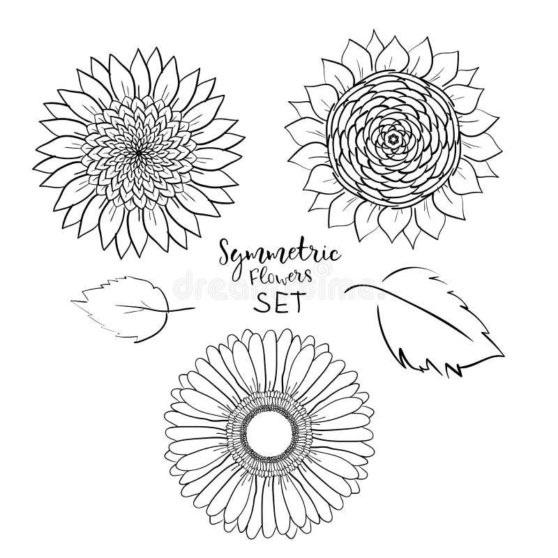Ensemble symétrique floral de fleurs d'été Gerbera tiré par la main, tournesol, illustration de vecteur d'ensemble sur le fond bl illustration de vecteur