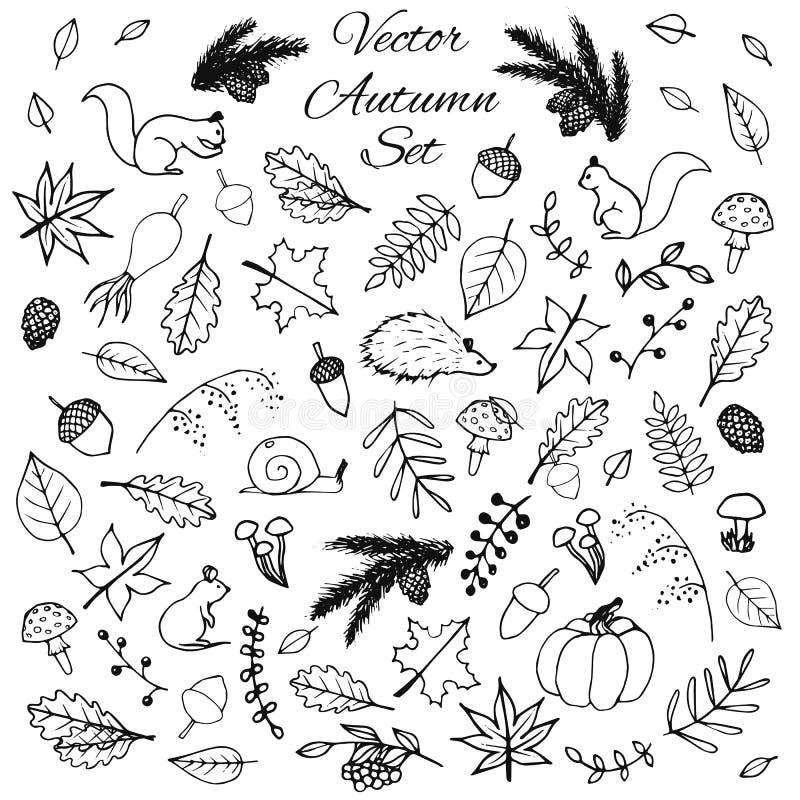 Ensemble tiré par la main d'éléments d'automne de vecteur : animaux et feuilles illustration libre de droits